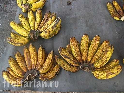 Бананы малазийские