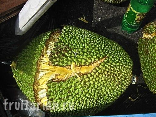 Спелый джекфрут