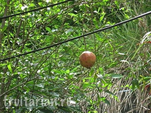 тайские гранаты
