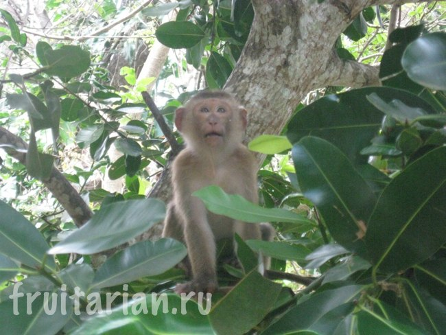 Обезьяны в Monkey Hill in Phuket-Town
