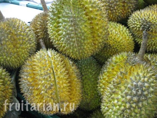 Дурианы сорта Кадун в Таиланде