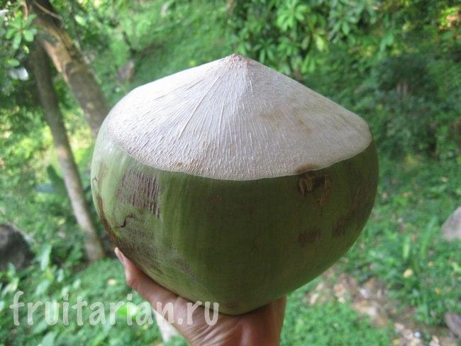 Огромные тайские кокосы