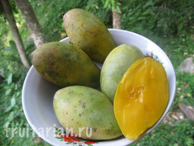 Маленькие зелёные манго