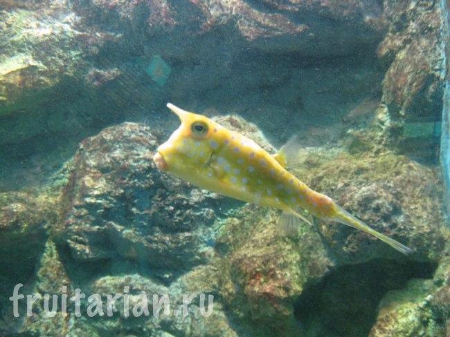 Аквариум Phuket Aquarium