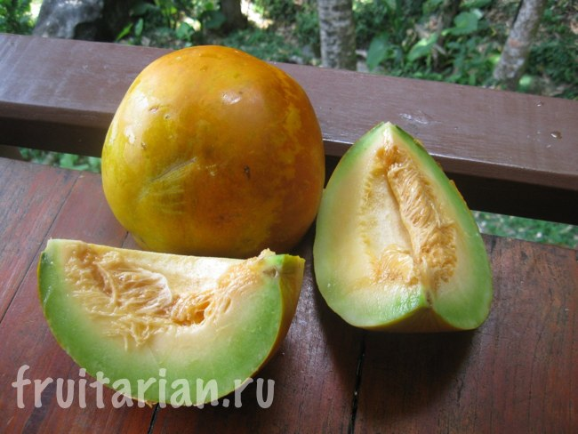 Тайская дыня авокадная