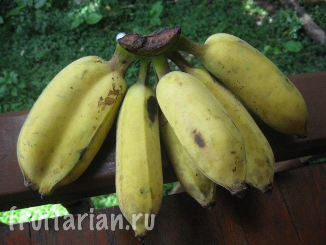 Сросшиеся бананы