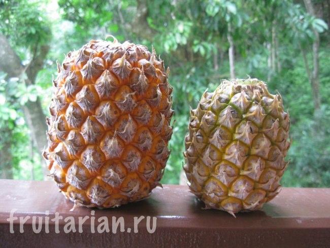 маленькие тайские ананасы