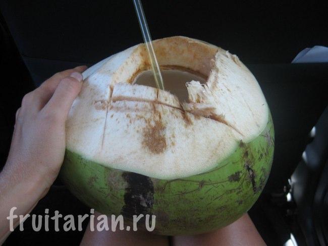 огромный кокос