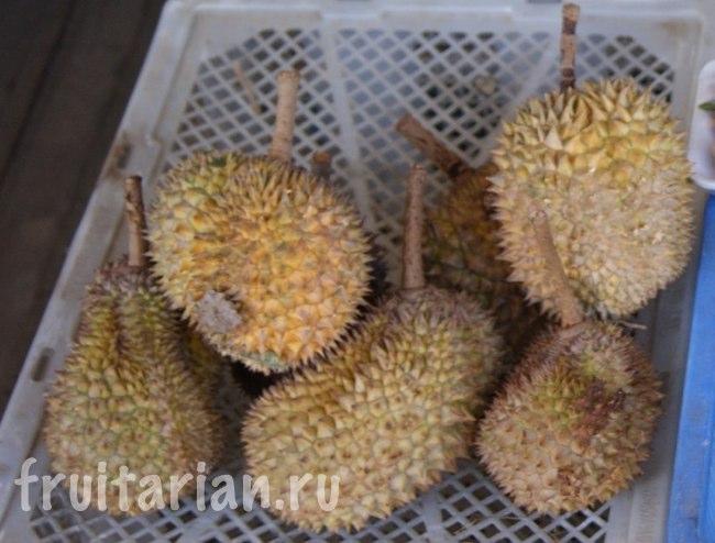 дурианы D24 (фруктовый рынок в Кундасане)
