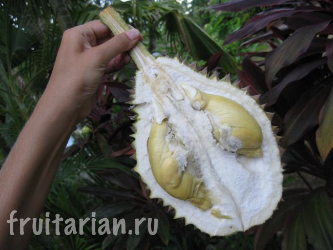 дуриан Timbangan