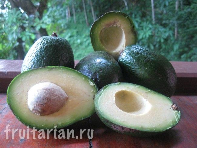 Авокадо сорта Ardith