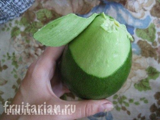 avocado_FUERTE5