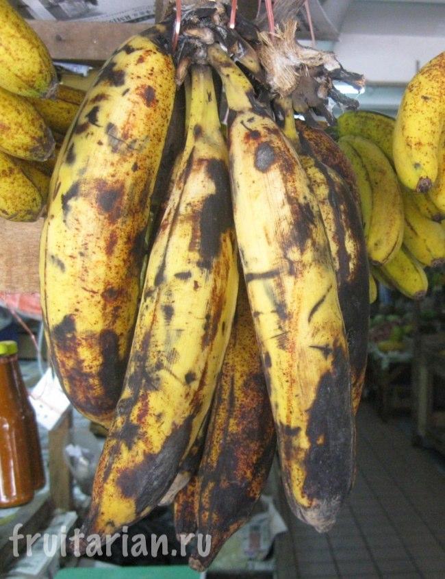 Бананы-гиганты в Малайзии