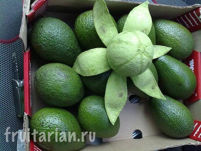 авокадо цветочек