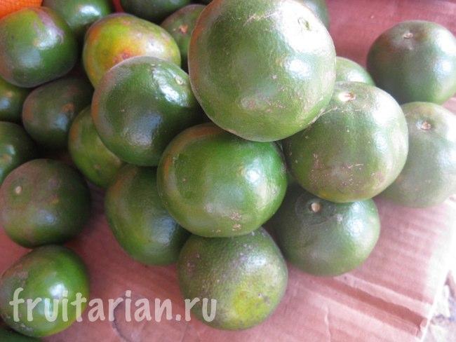 зелёные танжерины