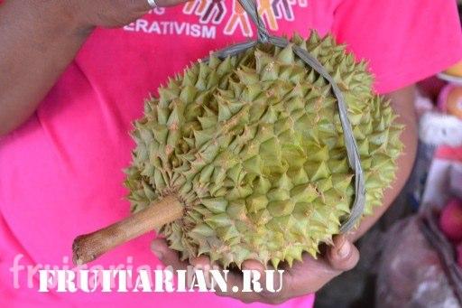 premium-durian2