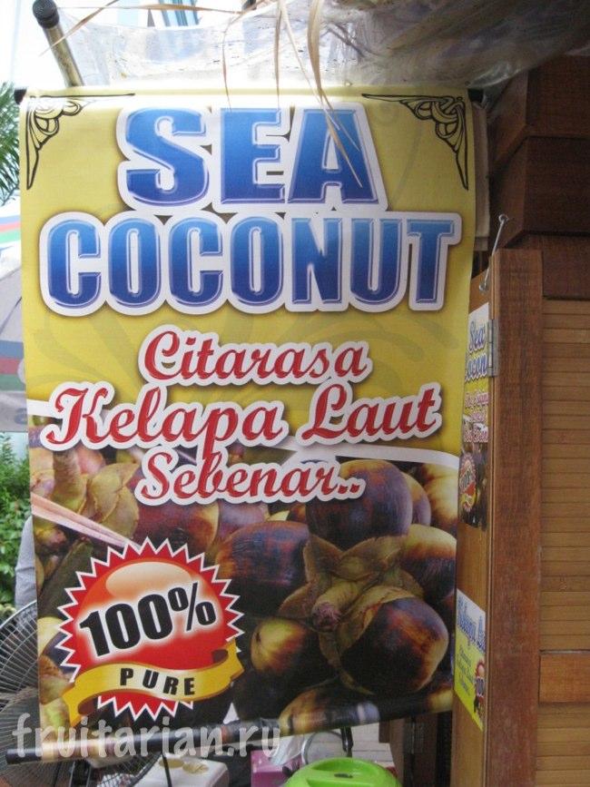Морской кокос / Sea coconut