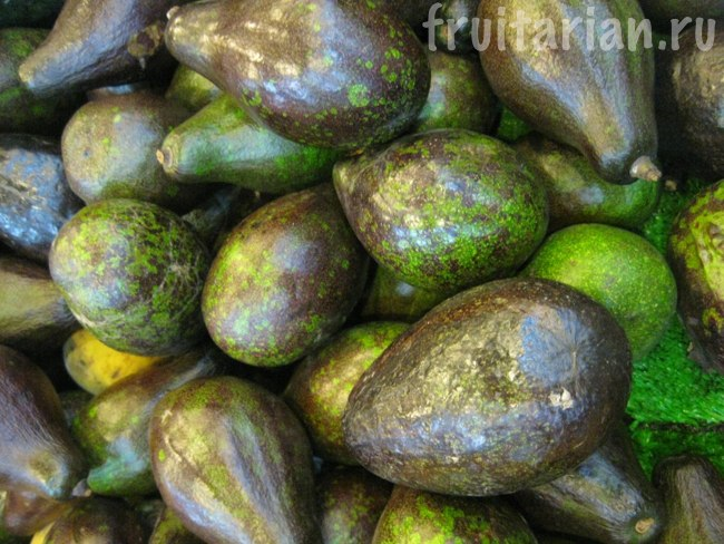 филиппинские авокадо
