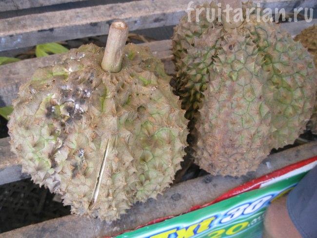 дуриан Phuyat