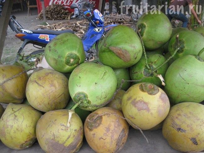 золотистые и зелёные кокосы