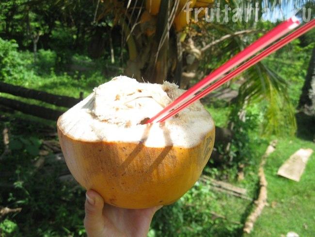 золотистые кокосы
