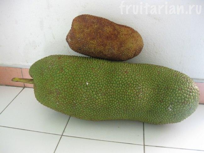 тайский чемпедак