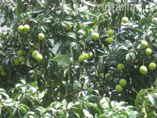 фрукт со вкусом борща