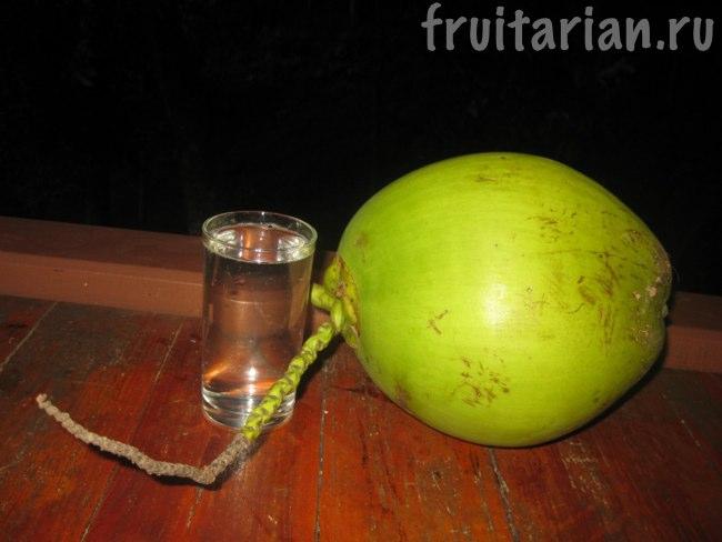 совсем молодой кокос