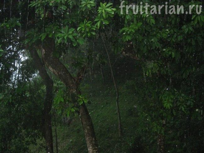 Дождливый Пхукет