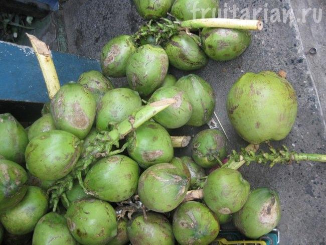 Средняя стадия зрелости кокосов