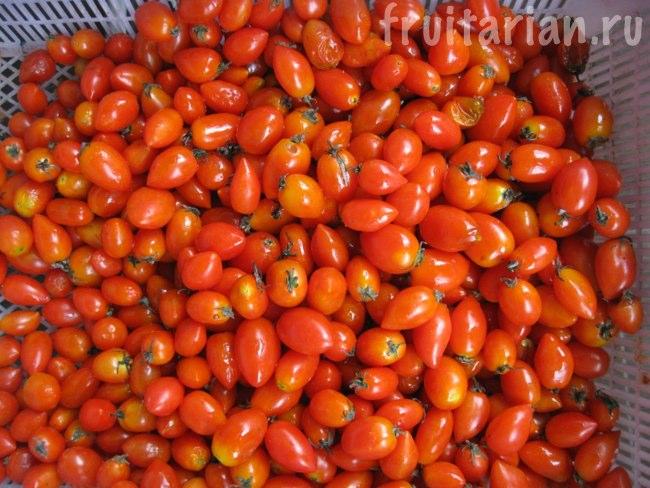 помидоры на Пангане