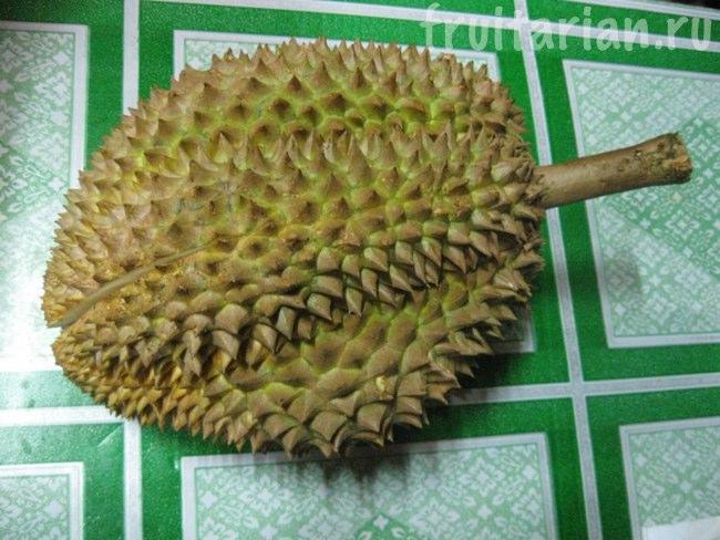 Филиппинский дуриан Monthong