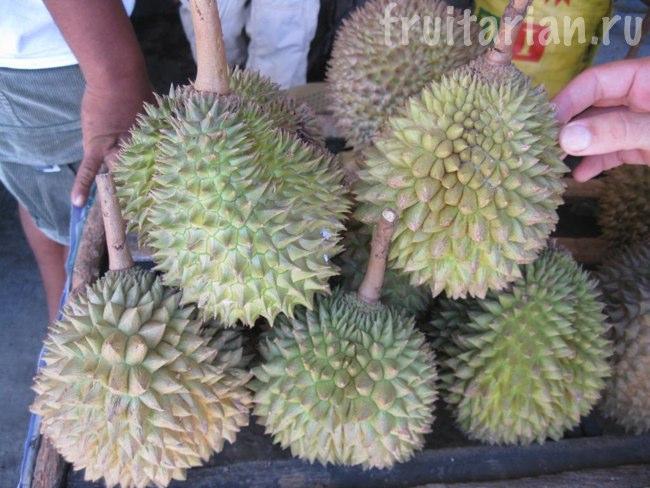 дуриан Monthong