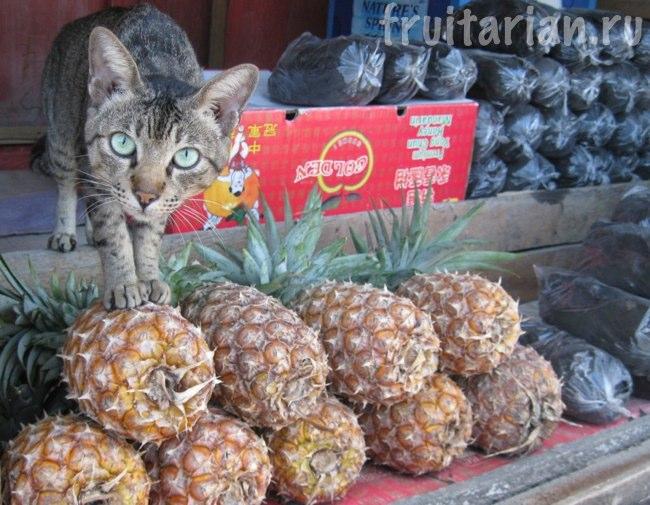 кот и ананасы