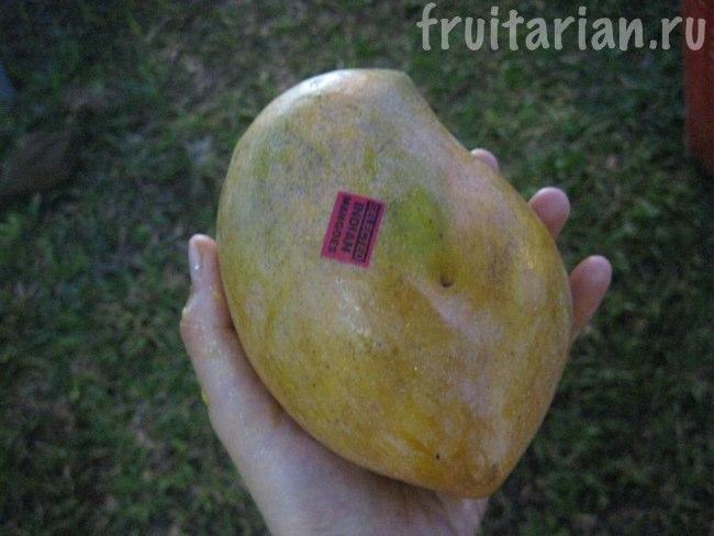 индийское манго