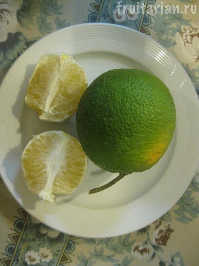 зелёные апельсины