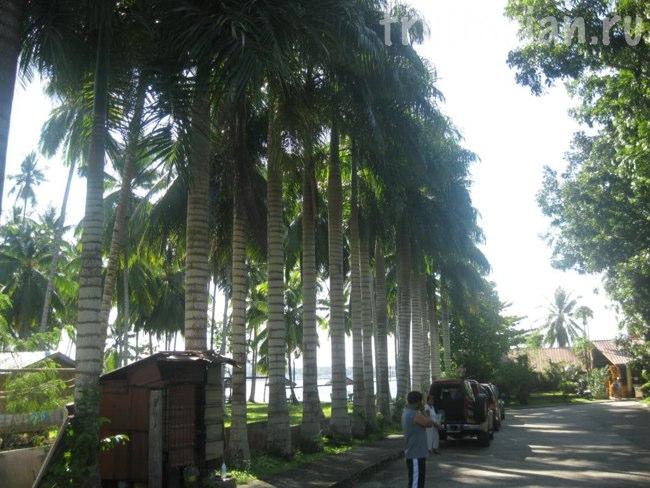 Пляж Mahan Garden