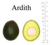 авокадо Ardith
