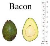 авокадо Bacon
