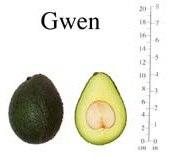 авокадо Gwen
