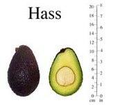 Авокадо Hass