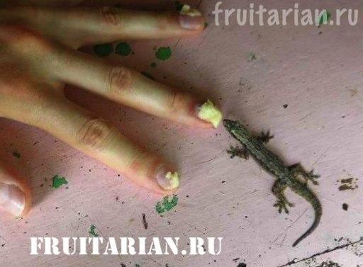 gekkon-est-durian