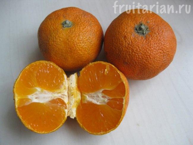 Китайские мандарины в сетке