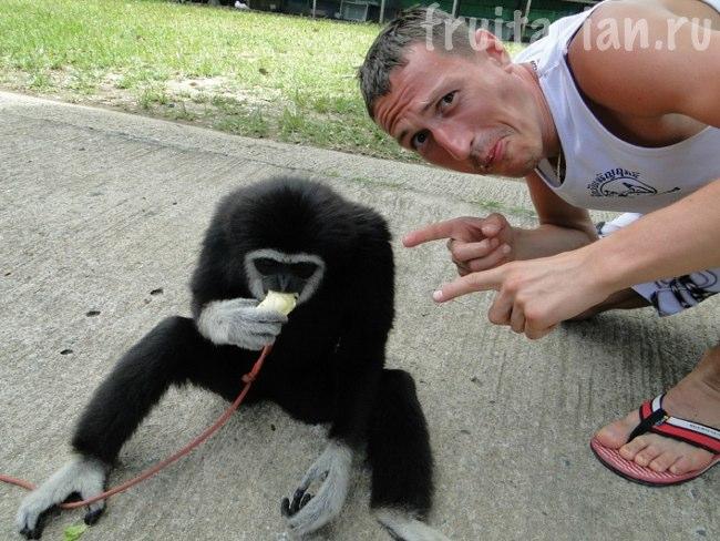 дуриан и обезьяна