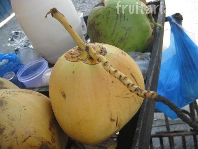 жёлтые кокосы