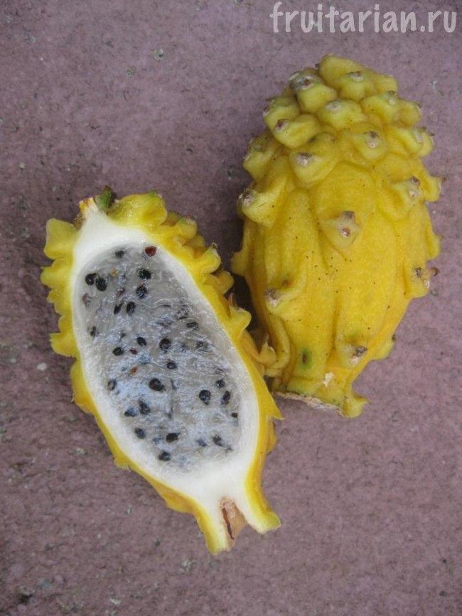 Жёлтая питахайя