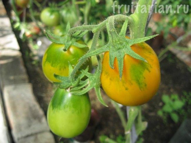 Жёлтые помидоры