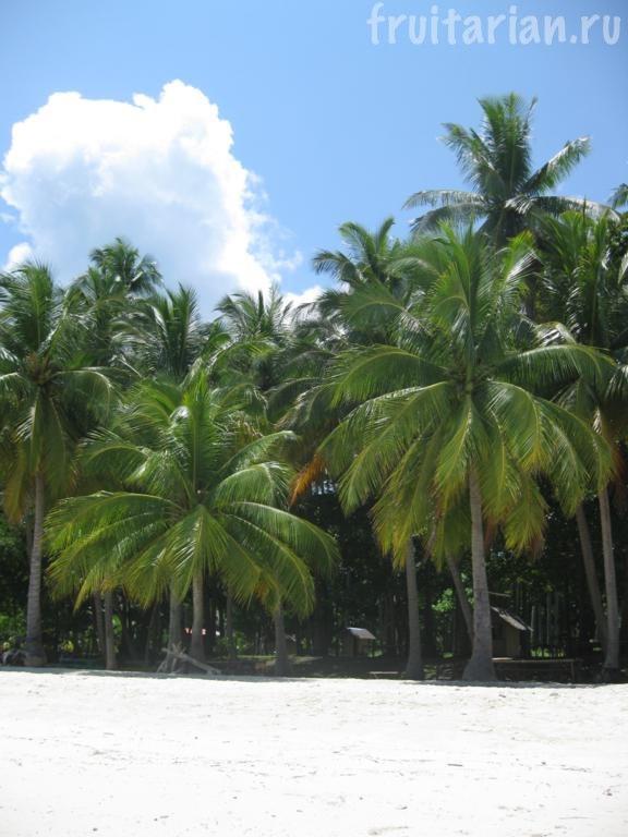 пляж Babusanta