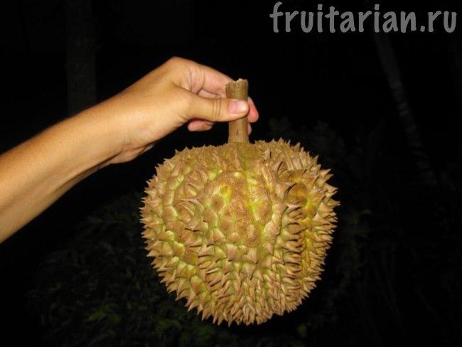 дуриан Чани 1,5 кг