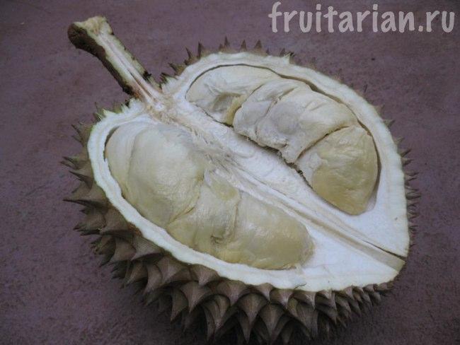 дуриан Malaysian Native